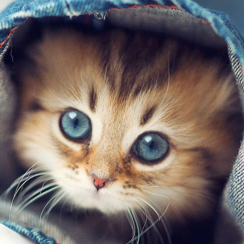 10 New Cute Animal Wallpaper Hd FULL HD 1920×1080 For PC Background 2020 free download cute kittens wallpapers for iphone 6 hd animal wallpaper for 800x800