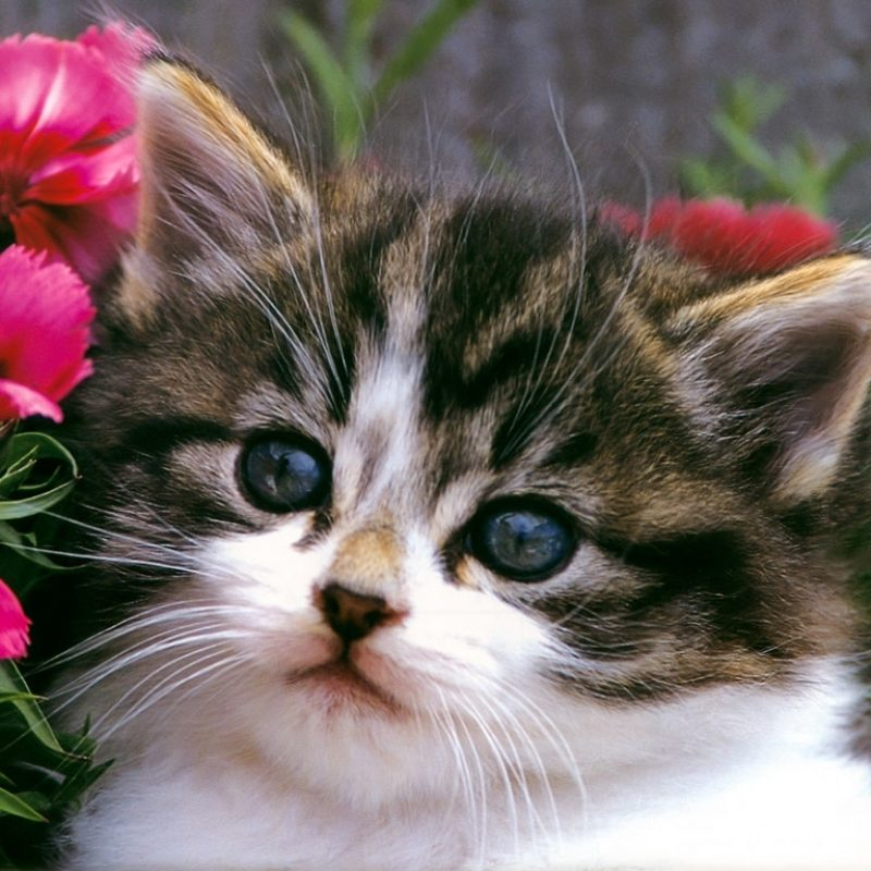 10 Most Popular Cute Kitten Pictures Free FULL HD 1920×1080 For PC Background 2018 free download cute kittens wallpapers free download 001 on kitten pictures 800x800