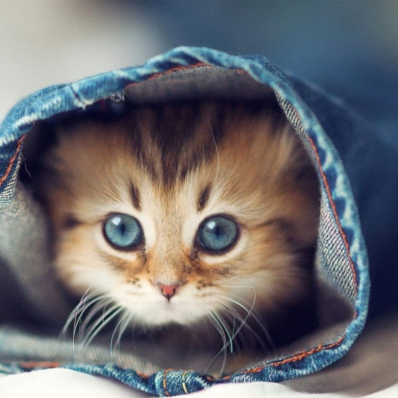 10 Most Popular Cute Wallpapers Of Kittens FULL HD 1920×1080 For PC Desktop 2018 free download cute kittens wallpapers new tab tabify io 800x800