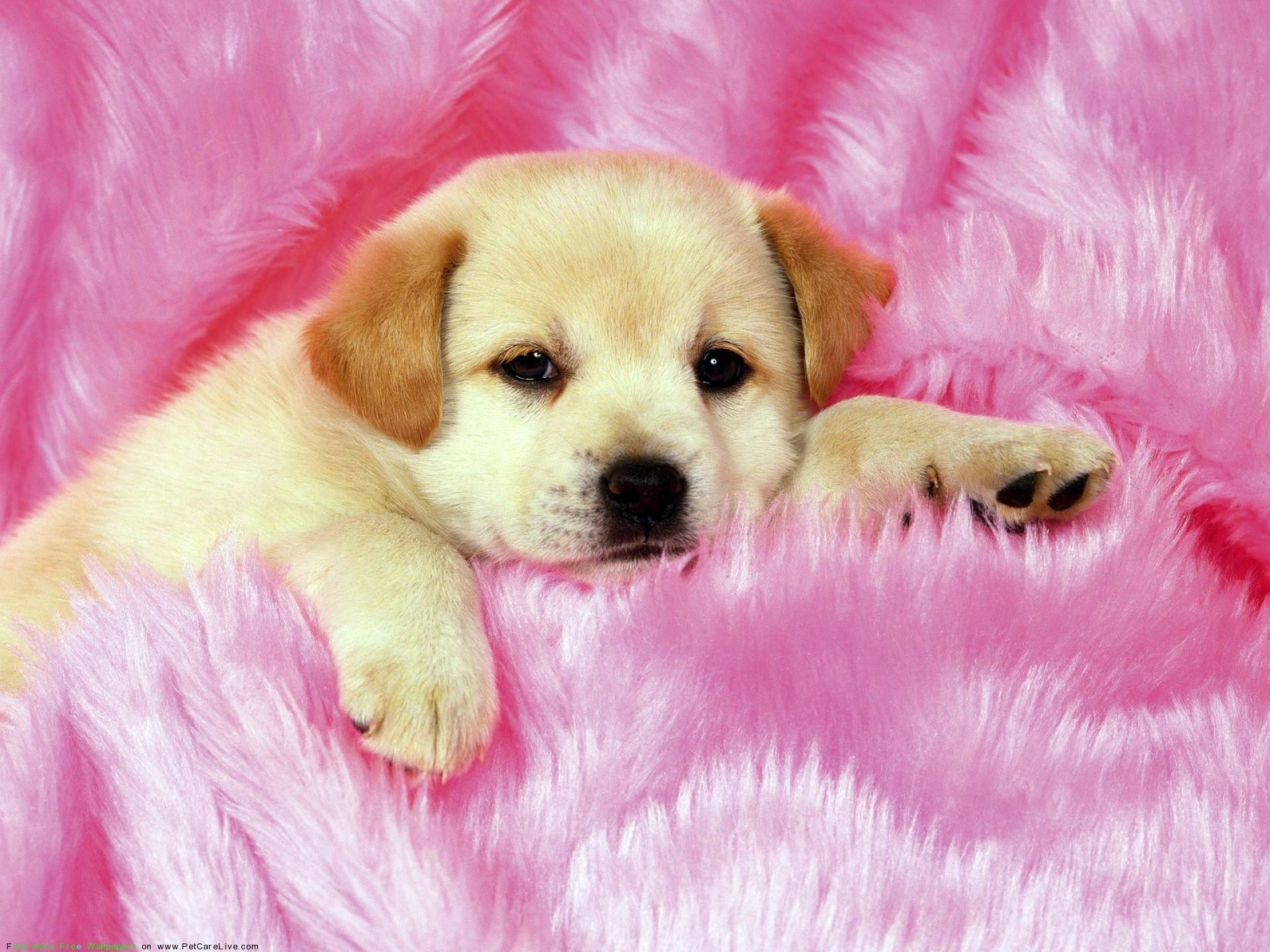 cute little puppys puppy pictures widescreen with small high quality