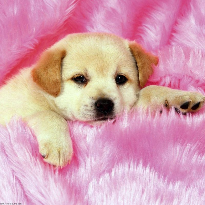 10 Best Dogs And Puppies Wallpaper FULL HD 1080p For PC Background 2018 free download cute little puppys puppy pictures widescreen with small high quality 2 800x800