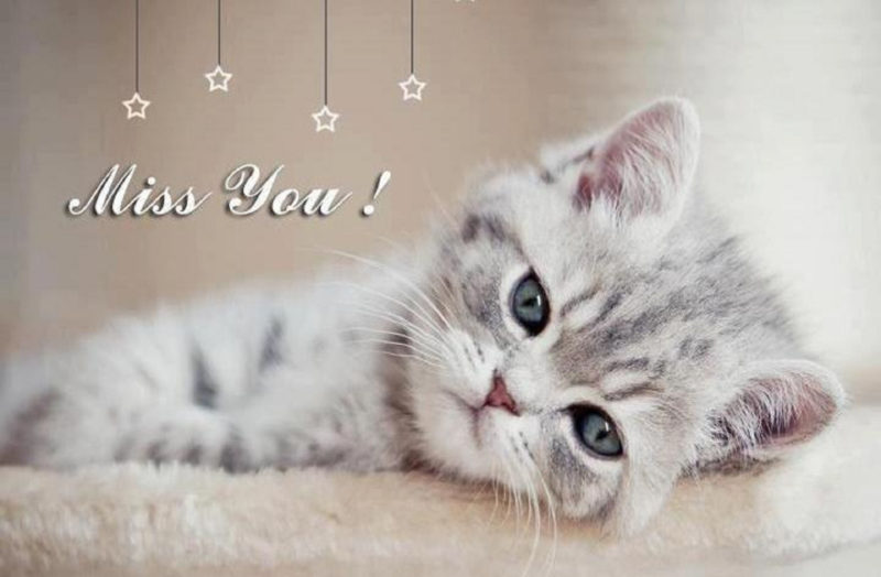 10 Most Popular Missing You Pics FULL HD 1920×1080 For PC Background 2018 free download cute miss you quote pictures photos and images for facebook 800x524