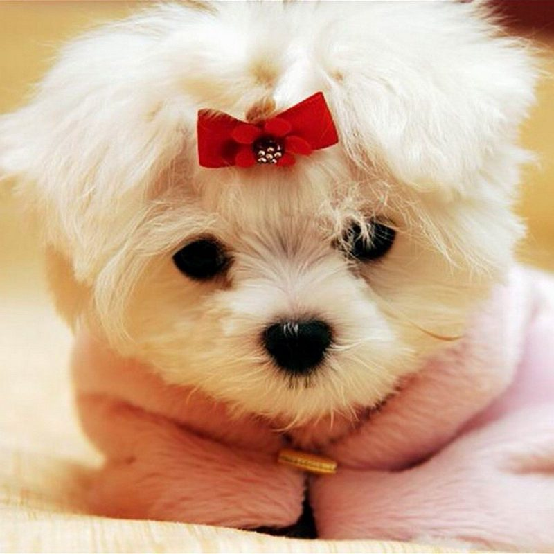 10 New Cute Puppy Pictures Wallpaper FULL HD 1080p For PC Background 2020 free download cute puppies 4 390189 high definition wallpapers wallalay 800x800