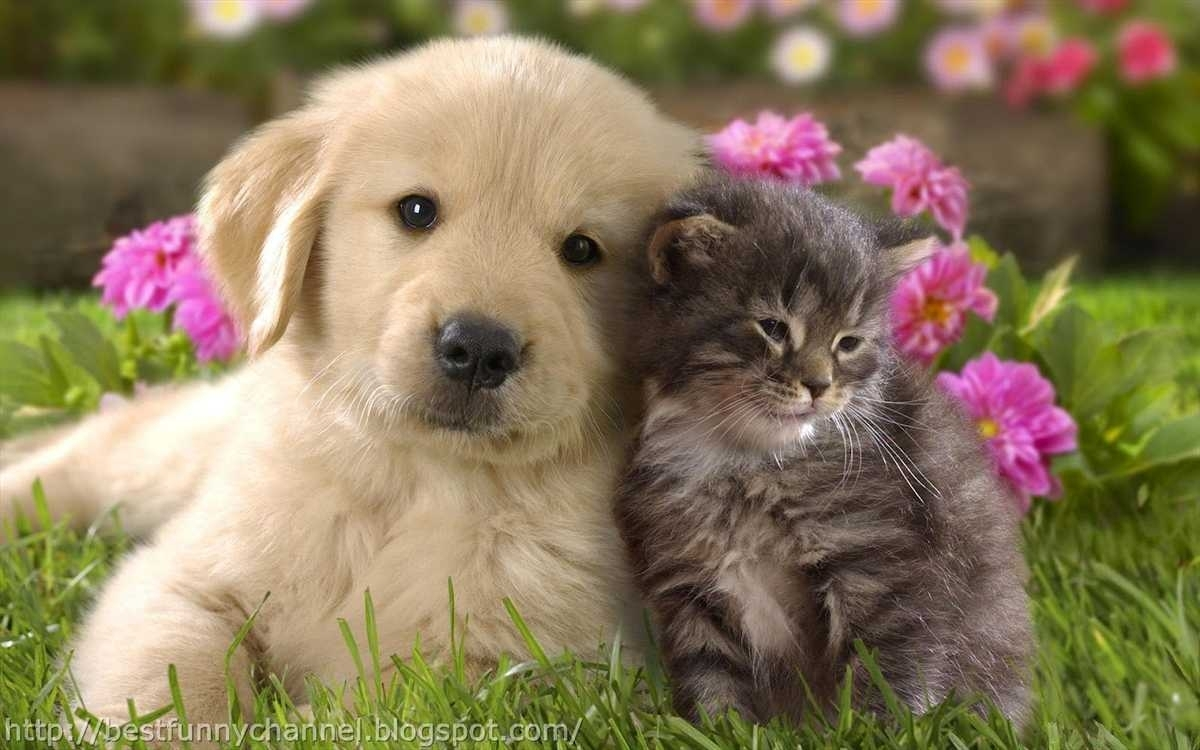 cute puppies and kittens wallpaper ~ free puppy pictures wallpapers
