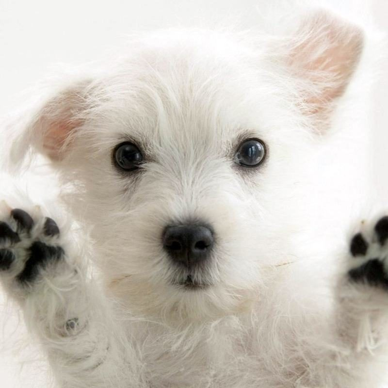 10 New Cute Puppy Pictures Wallpaper FULL HD 1080p For PC Background 2020 free download cute puppies for wallpapers 800x800