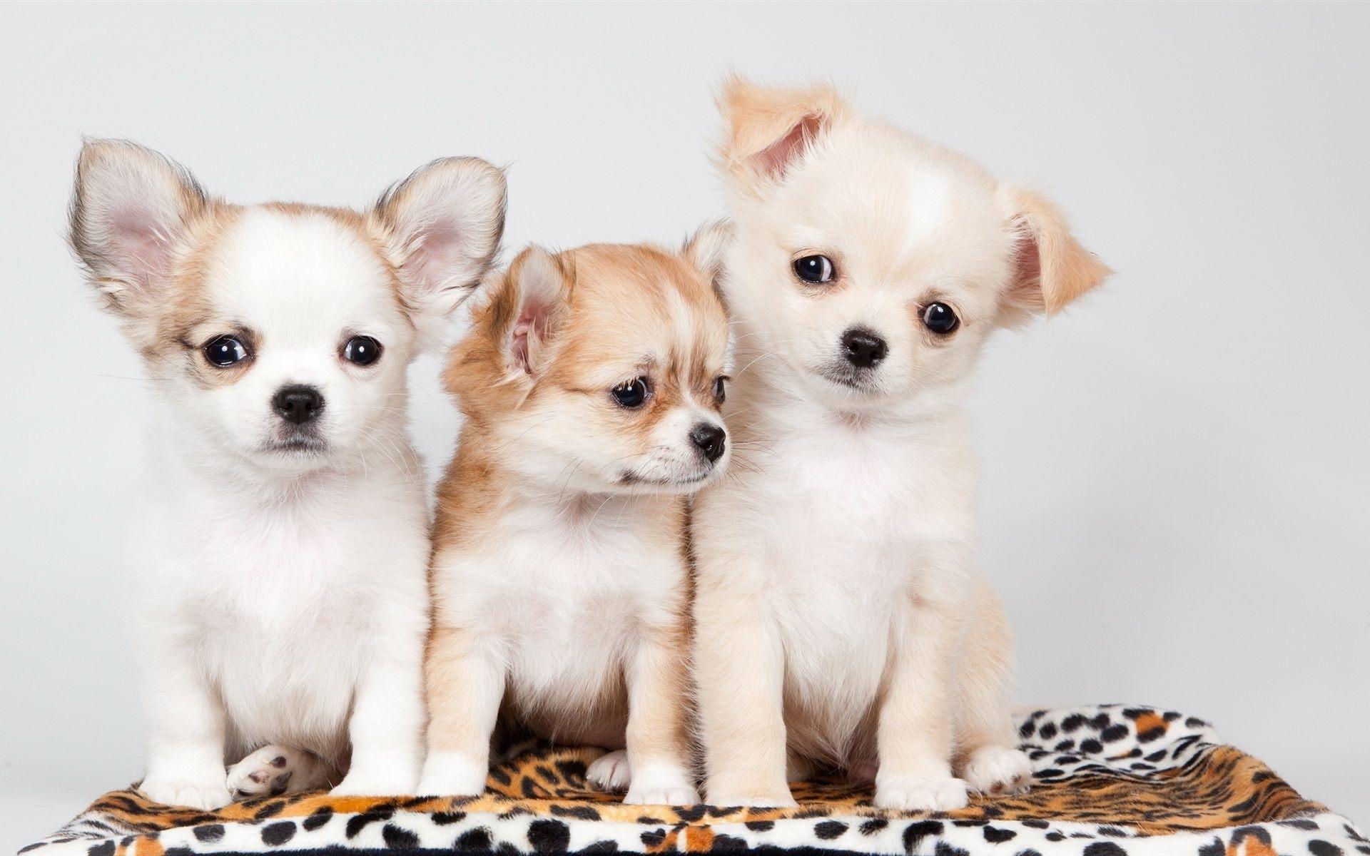 cute puppies wallpaper | wallpaper clicker | pinterest | wallpaper
