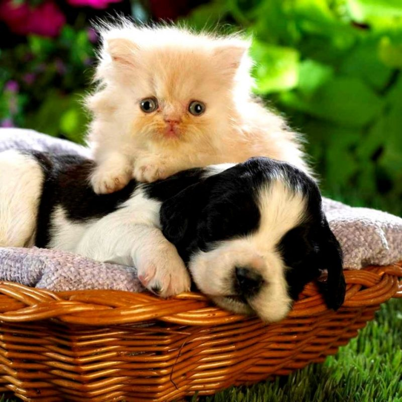 10 Top Puppy And Kitten Wallpaper FULL HD 1920×1080 For PC Background 2020 free download cute puppy and kitten wallpaper wallpapers gallery 800x800