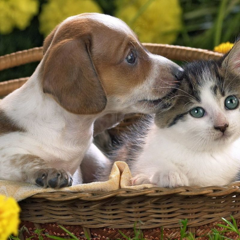 10 New Kitten And Puppy Wallpaper FULL HD 1920×1080 For PC Desktop 2020 free download cute puppy and kitten wallpapers 58 images 1 800x800