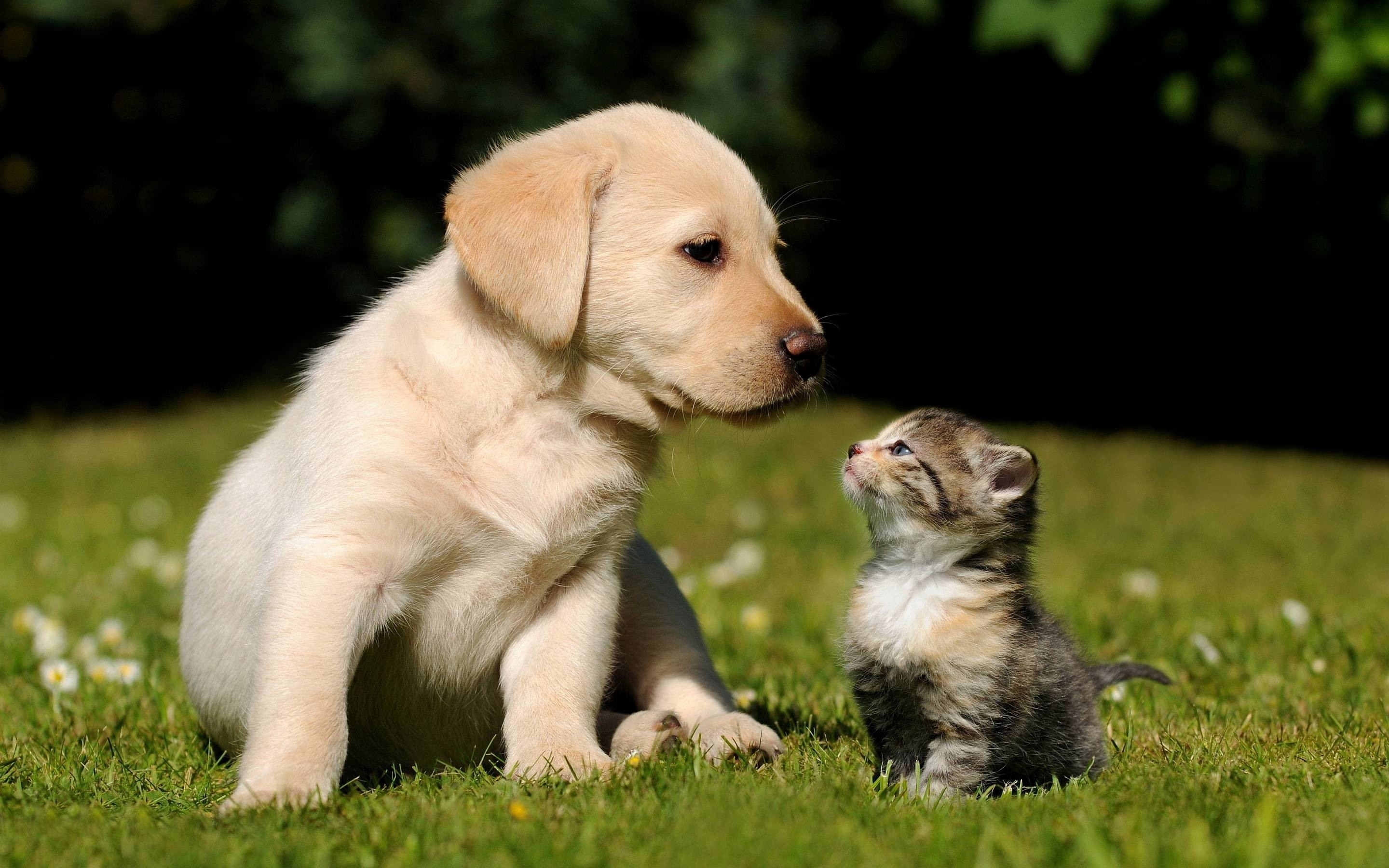 cute puppy and kitten wallpapers (58+ images)