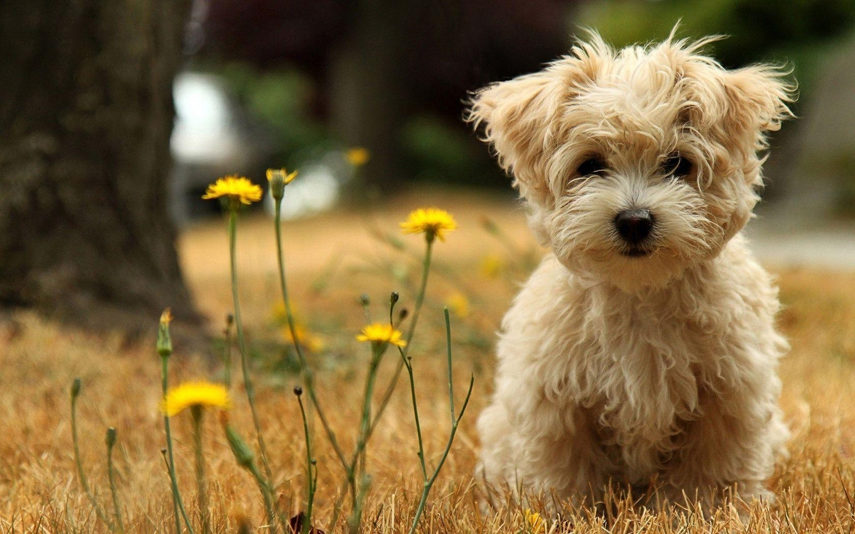 cute puppy desktop wallpapers - wallpaper cave