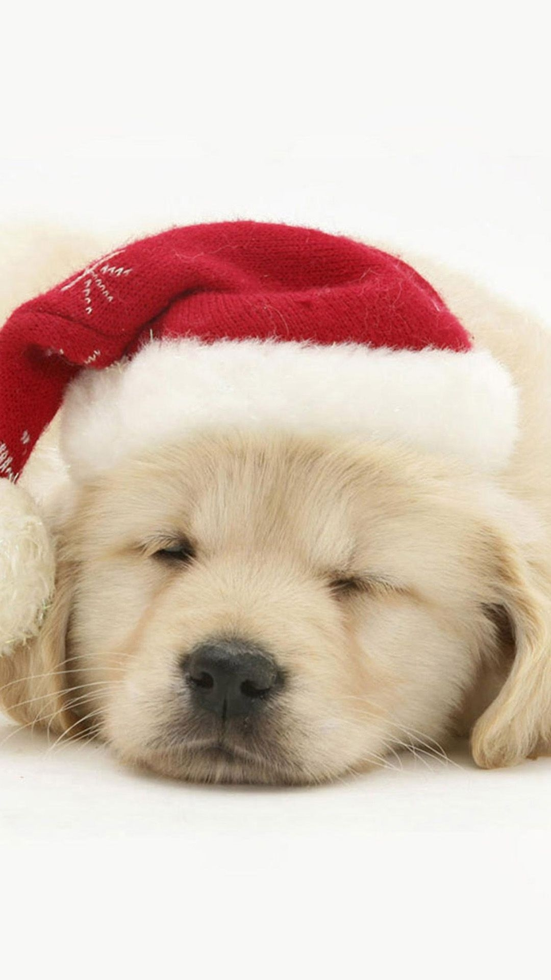 cute puppy in christmas hat iphone 6 wallpaper | christmas wallpaper