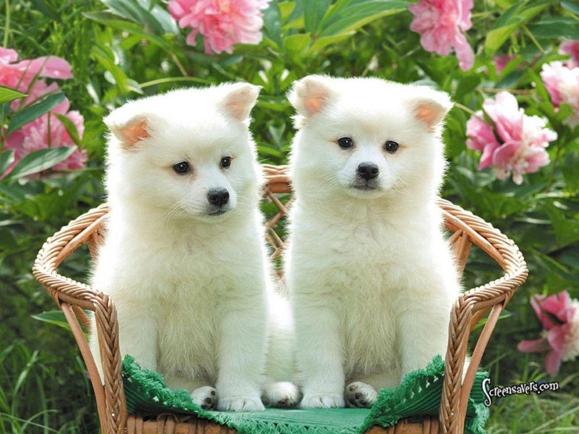 cute puppy wallpaper dogs hd wallpapers pinterest dog | wallpapers