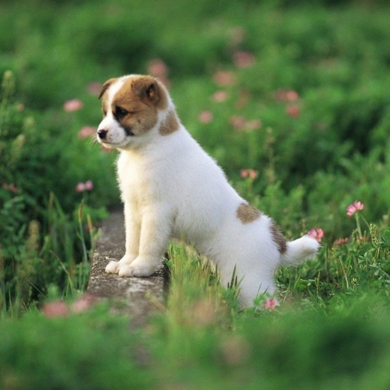 10 Most Popular Cute Puppy Wallpaper Hd FULL HD 1920×1080 For PC Desktop 2021 free download cute puppy wallpapers hd android apps on google play wallpapers 800x800