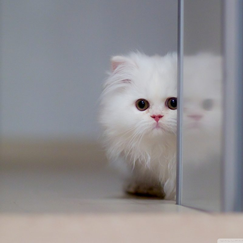 10 Top Cute Cat Wallpapers Hd FULL HD 1920×1080 For PC Background 2020 free download cute white cat e29da4 4k hd desktop wallpaper for 4k ultra hd tv e280a2 wide 1 800x800