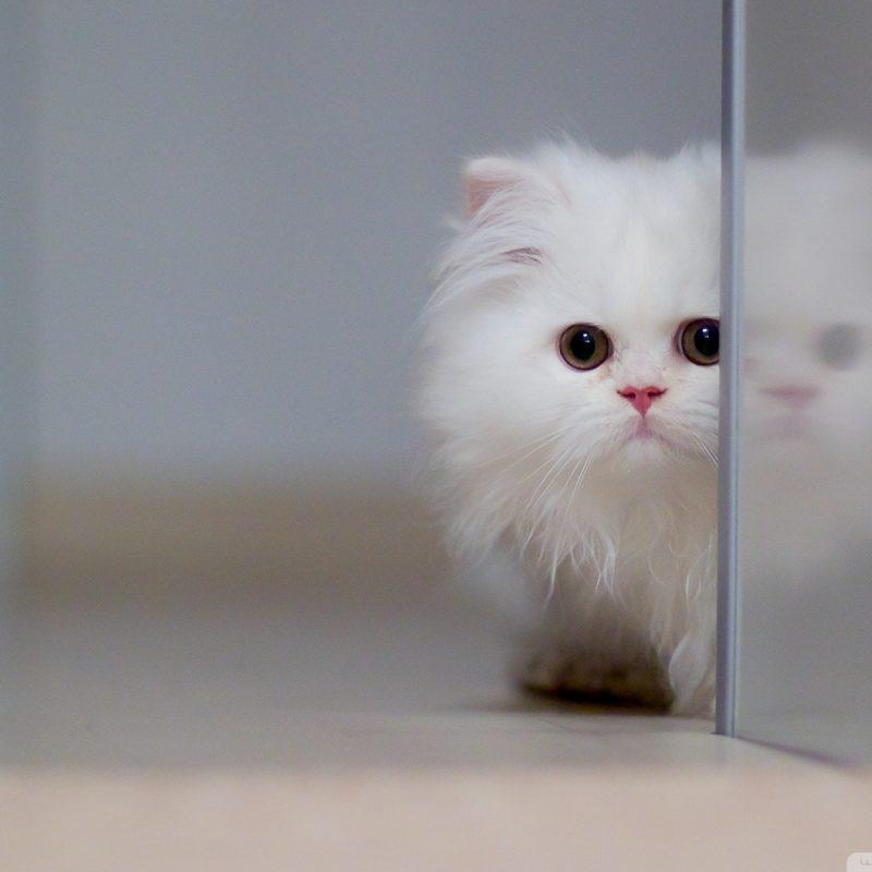 10 New Cute White Cat Pictures FULL HD 1920×1080 For PC Desktop 2018 free download cute white cat e29da4 4k hd desktop wallpaper for 4k ultra hd tv e280a2 wide 800x800