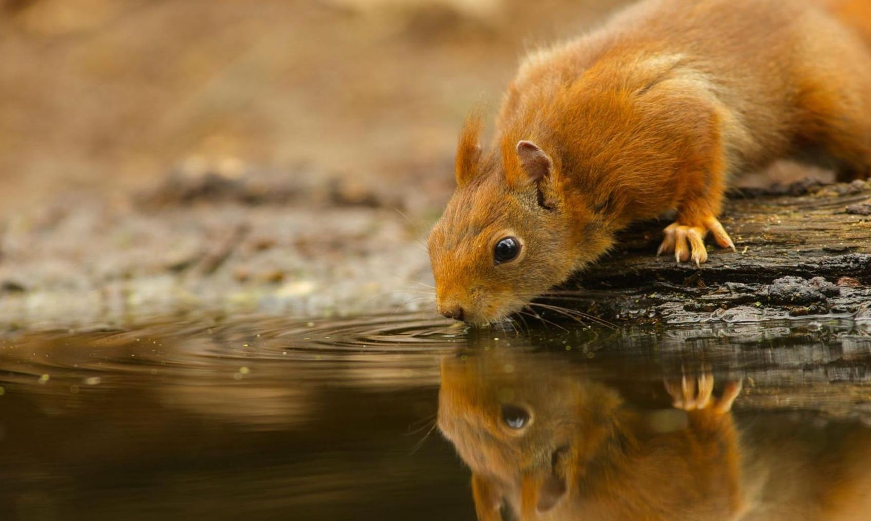 cute wild animal wallpaper | hd desktop background