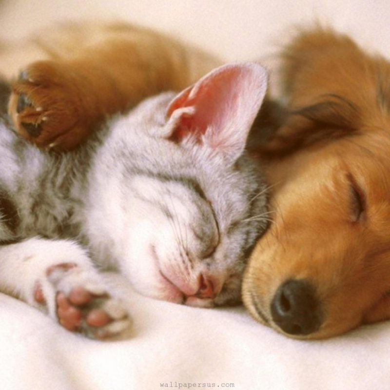 10 Most Popular Pics Of Puppies And Kittens FULL HD 1920×1080 For PC Desktop 2018 free download cutest kittens puppies falling asleep compilation youtube 3 800x800