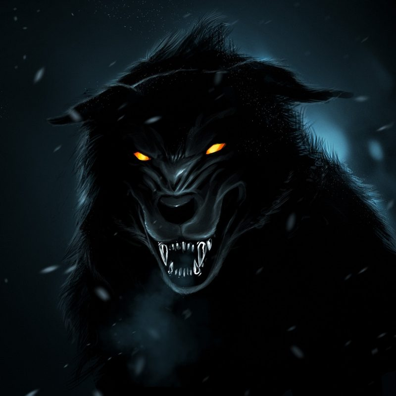 10 Latest Black Wolf Wallpaper Hd FULL HD 1920×1080 For PC Desktop 2018 free download d black wolf wallpapers hd free images at clker vector clip 800x800