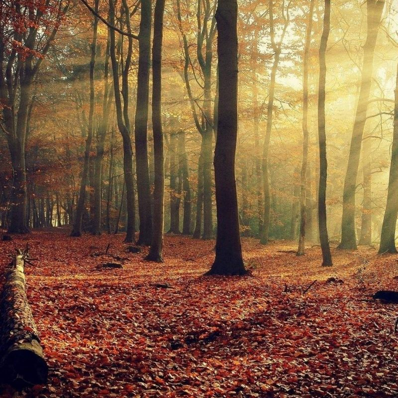 10 Best Autumn Forest Wallpaper Hd FULL HD 1920×1080 For PC Desktop 2020 free download d0bfd0bed185d0bed0b6d0b5d0b5 d0b8d0b7d0bed0b1d180d0b0d0b6d0b5d0bdd0b8d0b5 autumn pinterest forest wallpaper and 800x800