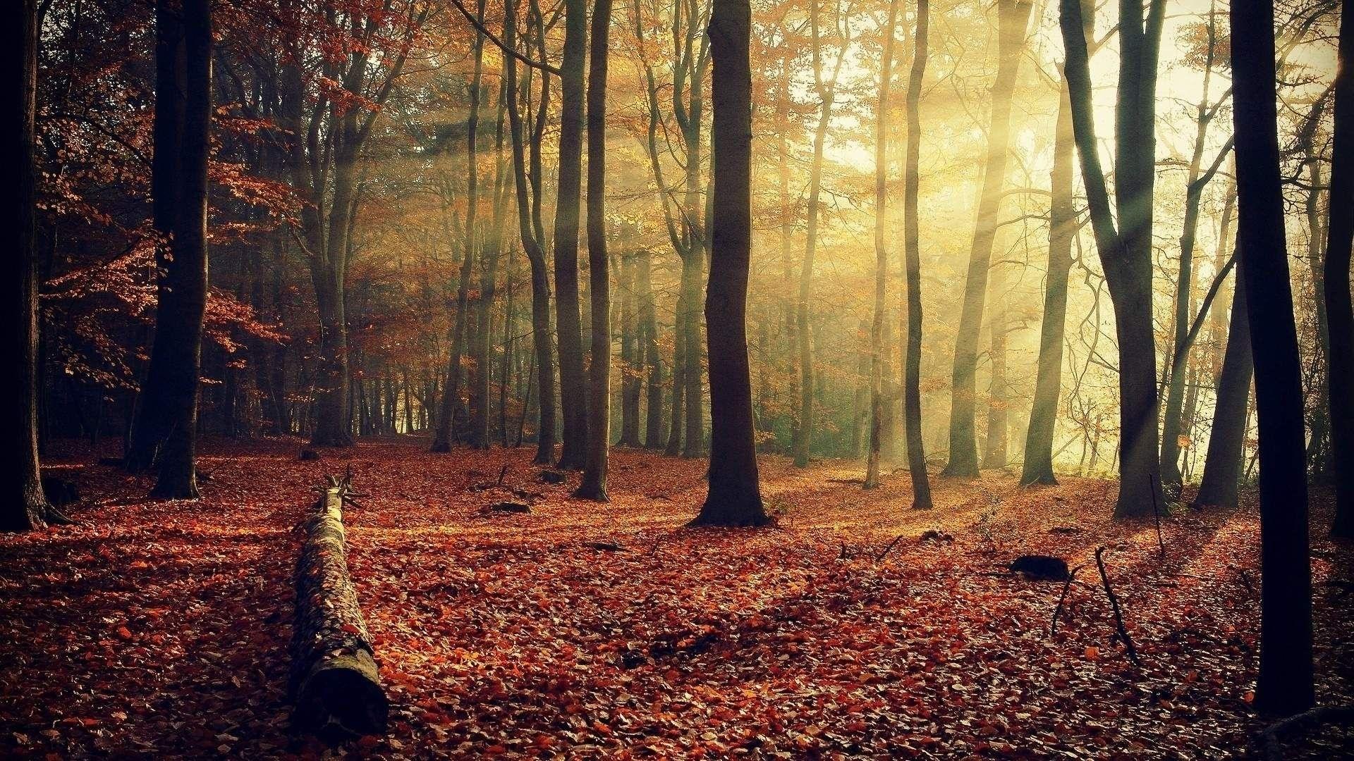 Похожее изображение   autumn   pinterest   forest wallpaper and