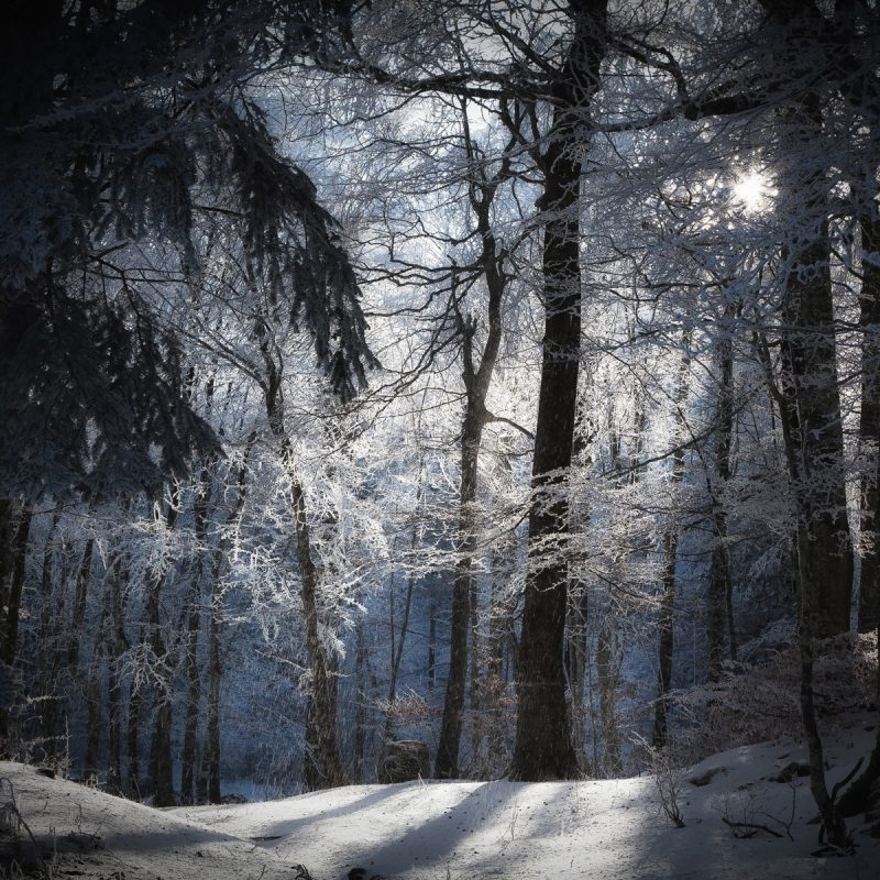 10 Latest Winter Forest Hd Wallpaper FULL HD 1920×1080 For PC Background 2020 free download daily wallpaper winter forest i like to waste my time 800x800