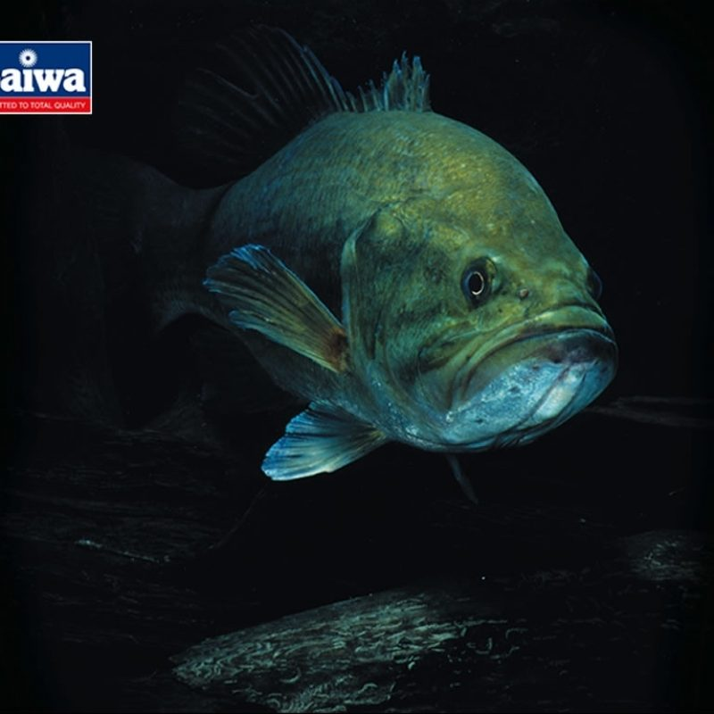 10 Most Popular Bass Fishing Screen Saver FULL HD 1920×1080 For PC Background 2021 free download daiwa screensavers and wallpaper 800x800