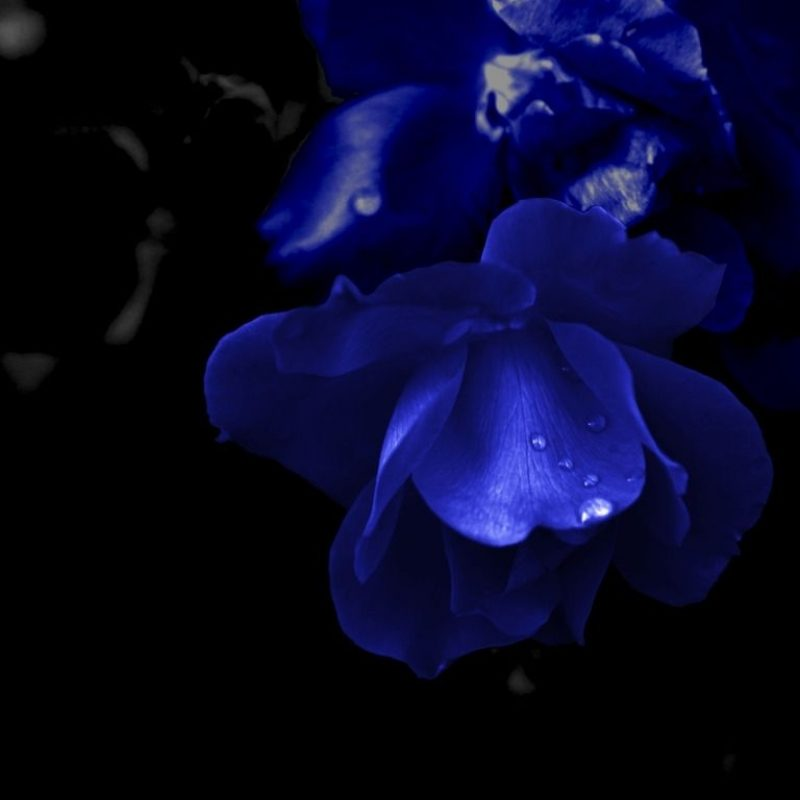 10 Top Dark Blue Flower Wallpaper FULL HD 1080p For PC Background 2018 free download dark blue flowers tumblr widescreen 2 hd wallpapers school 800x800