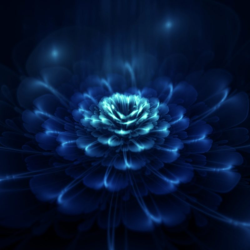 10 Top Dark Blue Flower Wallpaper FULL HD 1080p For PC Background 2018 free download dark blue flowers wallpaper 1395249 800x800