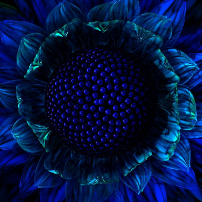 10 Top Dark Blue Flower Wallpaper FULL HD 1080p For PC Background 2018 free download dark blue flowers wallpaper 16151 wallpaper cool wallpaper 800x800
