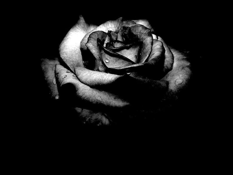 10 Best Black Flower Wallpaper FULL HD 1080p For PC Background 2020 free download dark flower wallpapers wallpaper cave 1 800x600