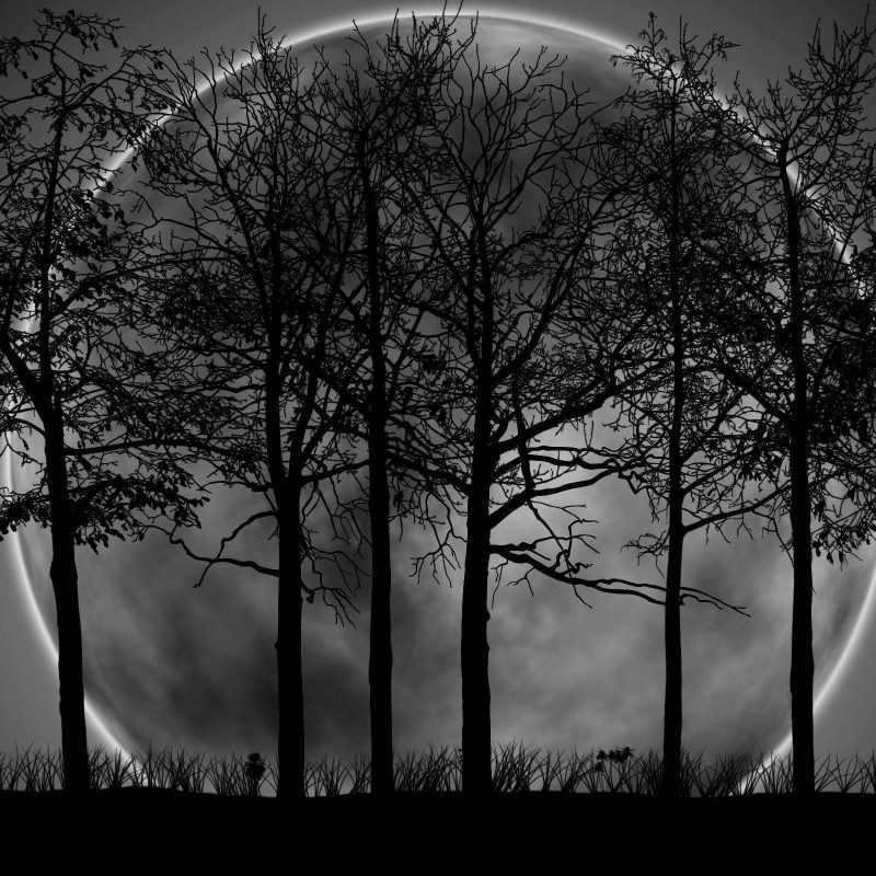 10 Best Dark Forest Background With Moon FULL HD 1080p For PC Background 2021 free download dark forest background with moon 9987 background check all 800x800