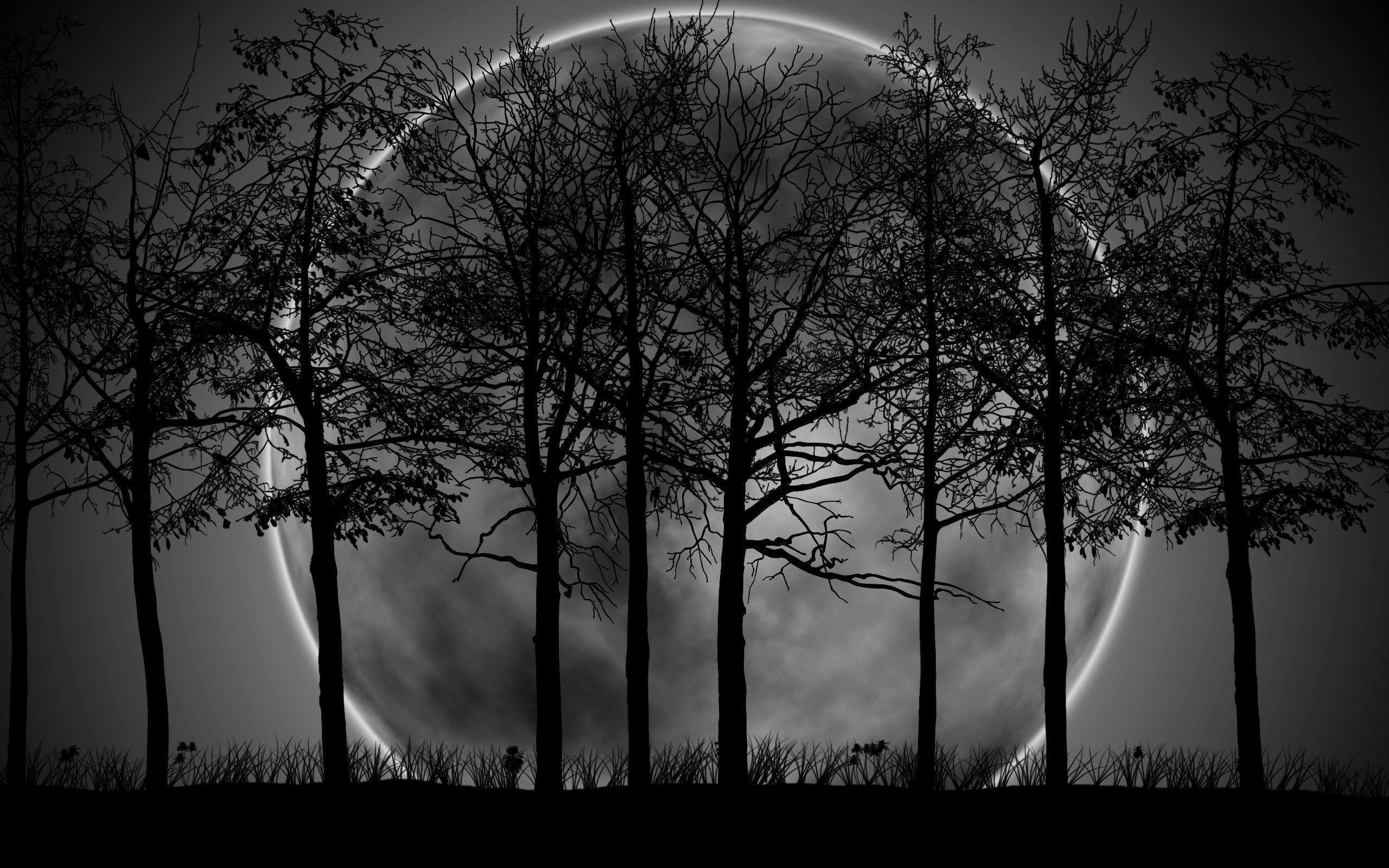 dark forest background with moon 9987 | background check all