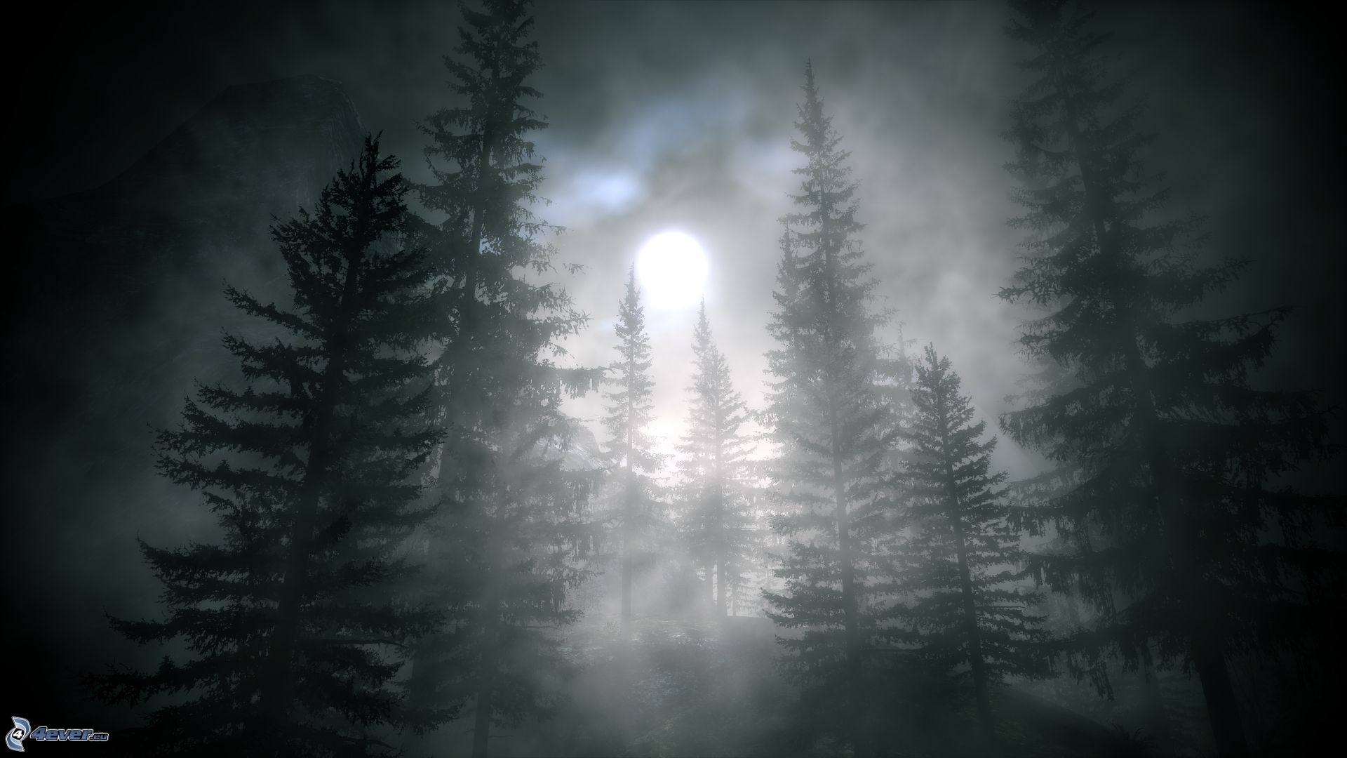 dark forest background with moon 9989 | background check all