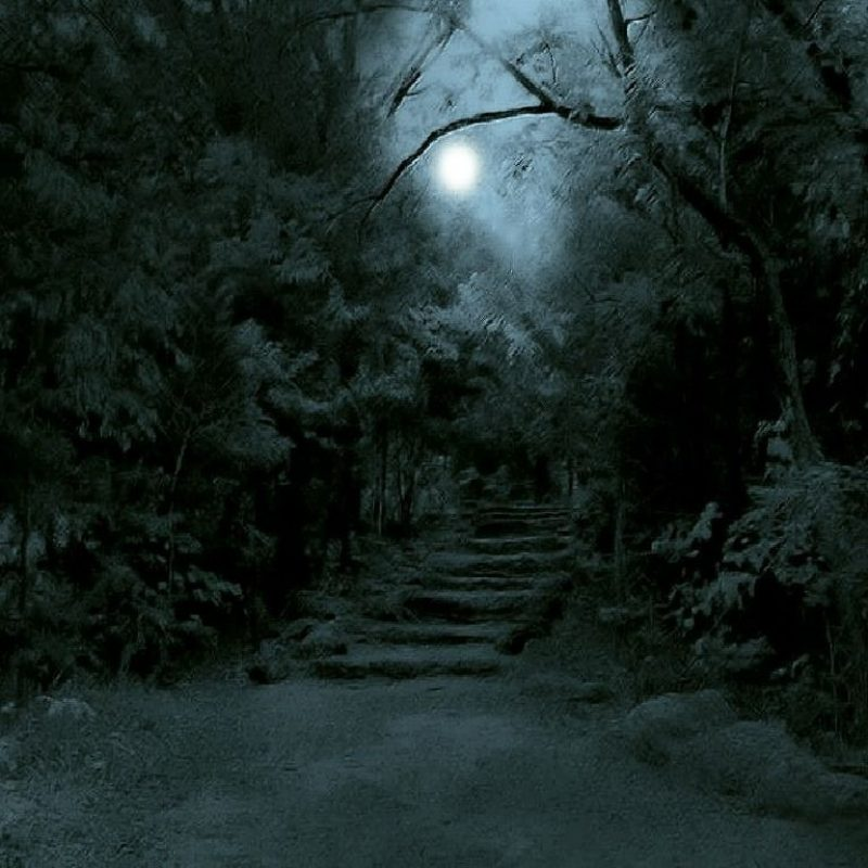 10 Best Dark Forest Background With Moon FULL HD 1080p For PC Background 2021 free download dark forest backgrounds dark forest wallpaper download the free 800x800