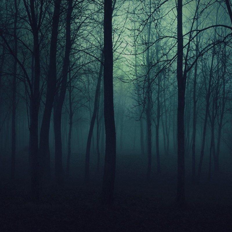 10 Latest Dark Forest Desktop Wallpaper FULL HD 1080p For PC Background 2021 free download dark forest backgrounds wallpapertags dark forest hd tablet 800x800