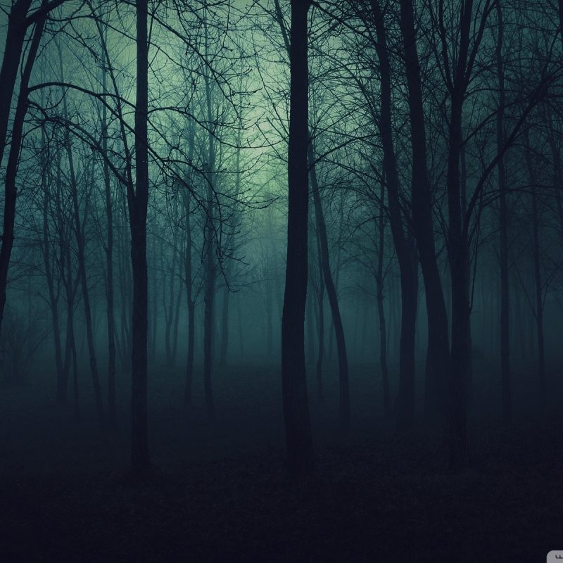 10 Most Popular Dark Forest Wallpapers Hd FULL HD 1920×1080 For PC Desktop 2020 free download dark forest e29da4 4k hd desktop wallpaper for 4k ultra hd tv e280a2 tablet 3 800x800