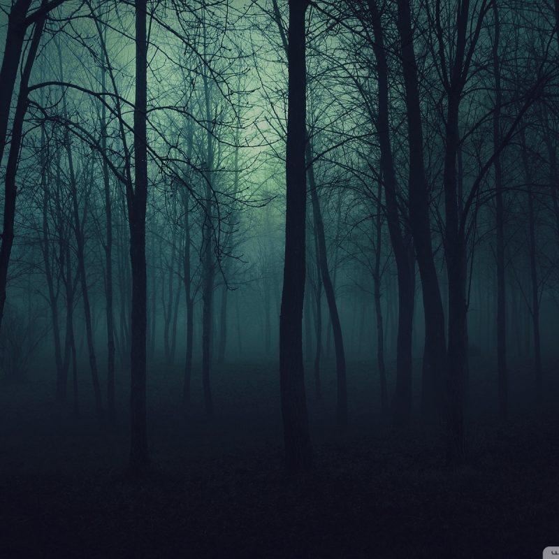 10 Latest Dark Forest Desktop Wallpaper FULL HD 1080p For PC Background 2021 free download dark forest e29da4 4k hd desktop wallpaper for 4k ultra hd tv e280a2 tablet 4 800x800