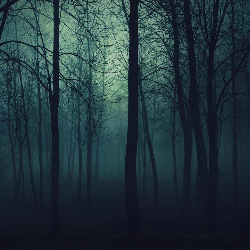 10 New Dark Nature Hd Wallpaper FULL HD 1920×1080 For PC Background 2021 free download dark forest e29da4 4k hd desktop wallpaper for 4k ultra hd tv e280a2 tablet 800x800