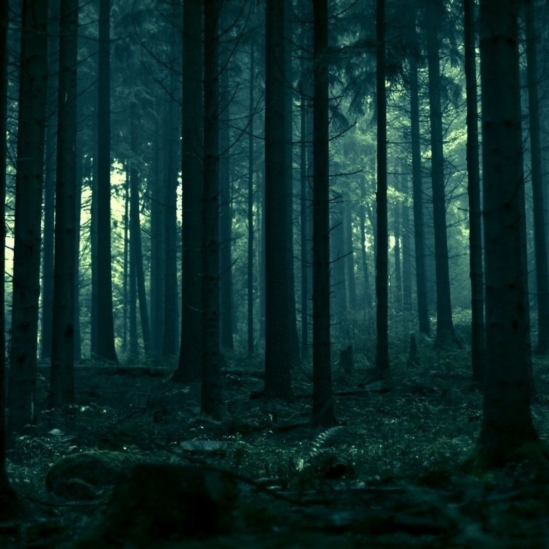 10 Top Dark Forest Hd Wallpaper FULL HD 1920×1080 For PC Desktop 2020 free download dark forest hd photo wallpaper photography pinterest foret 800x800
