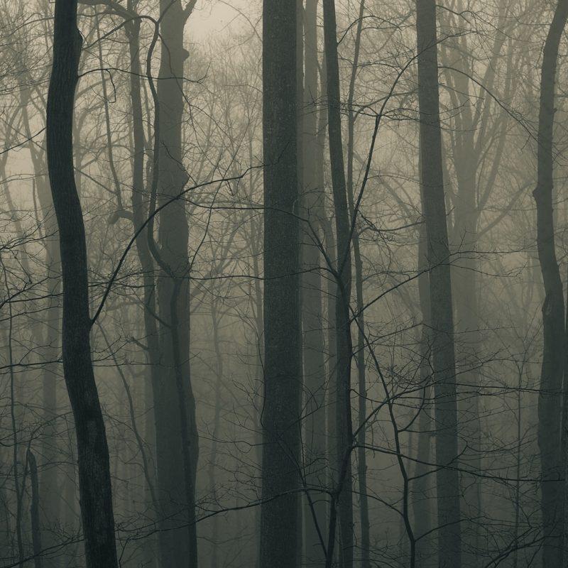 10 Latest Dark Forest Desktop Wallpaper FULL HD 1080p For PC Background 2021 free download dark forest hd wallpaper 1920x1080 id50994 wallpapervortex 800x800