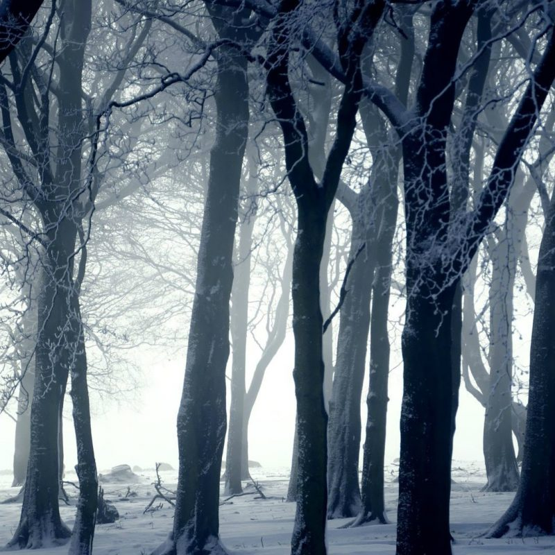 10 Best Snowy Dark Forest Wallpaper FULL HD 1080p For PC Background 2018 free download dark forest in winter wallpaper photography wallpapers 16423 800x800