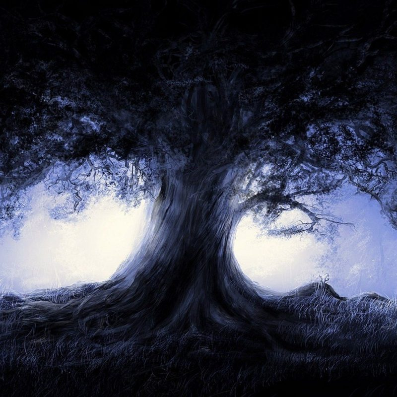 10 Best Dark Forest Background With Moon FULL HD 1080p For PC Background 2021 free download dark forest tree moon light wallpaper 1920x1080 504830 dfbhd 800x800