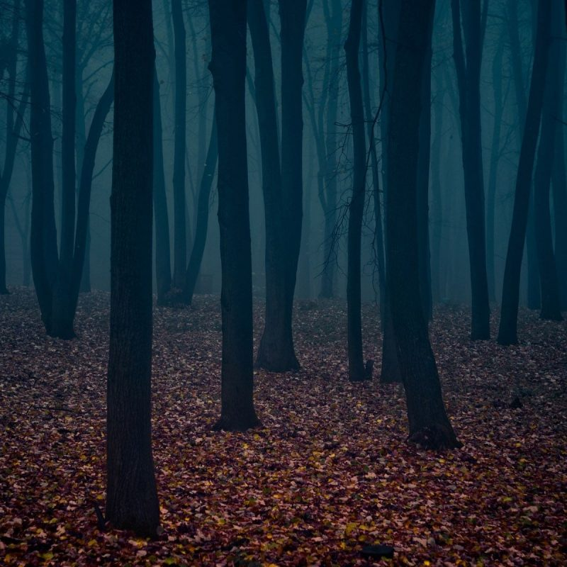 10 Most Popular Dark Forest Wallpapers Hd Full Hd 1920 1080 For Pc