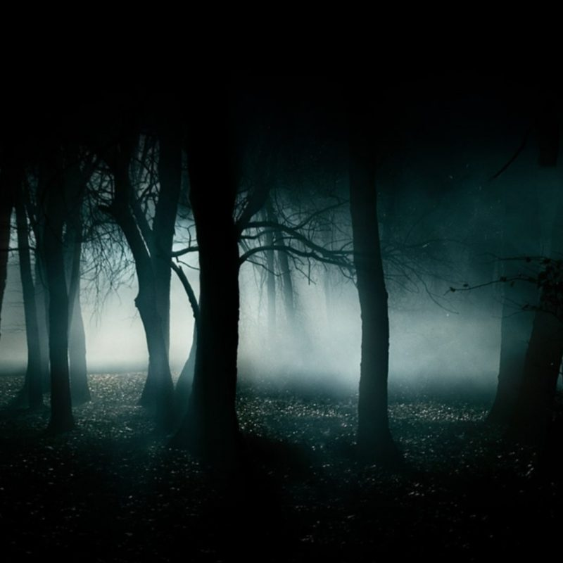 10 Top Dark Forest Wallpaper 1080P FULL HD 1920×1080 For PC Desktop 2018 free download dark forest wallpaper c2b7e291a0 download free hd backgrounds for desktop 800x800