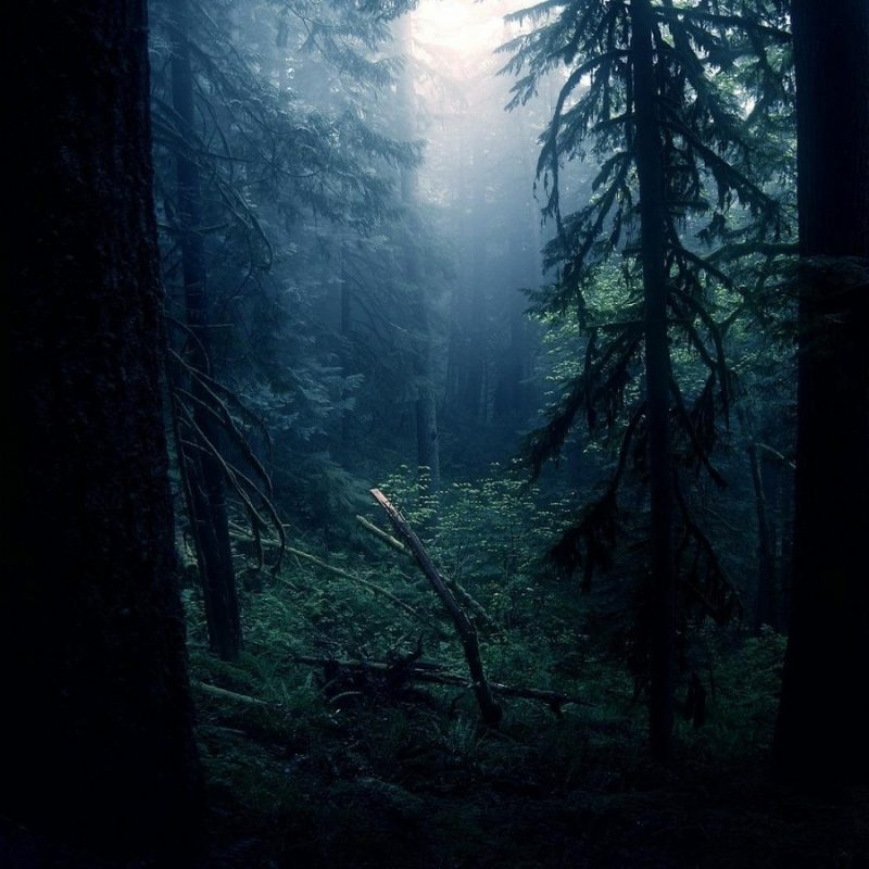 10 Top Dark Forest Hd Wallpaper FULL HD 1920×1080 For PC Desktop 2020 free download dark forest wallpaper dark forest hd wallpaper x celebswallpaper 800x800