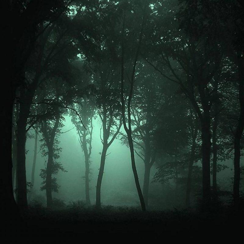 10 Latest Dark Forest Desktop Wallpaper FULL HD 1080p For PC Background 2021 free download dark forest wallpaper high quality resolution vrj earth pinterest 1 800x800