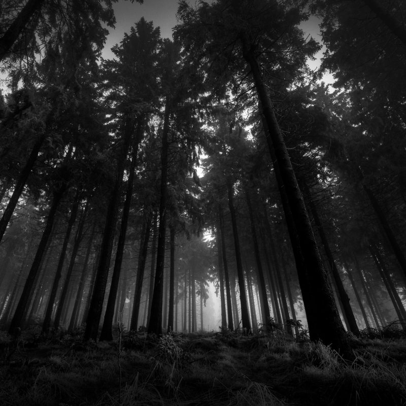 10 Top Dark Forest Hd Wallpaper FULL HD 1920×1080 For PC Desktop 2020 free download dark forest wallpapers for iphone free download subwallpaper 800x800