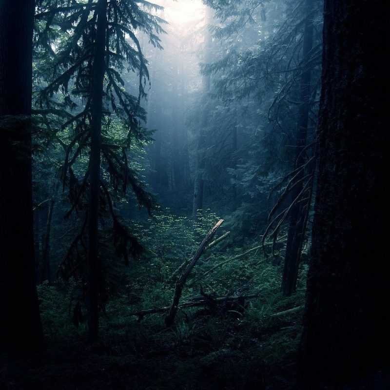 10 Top Dark Forest Wallpaper 1080P FULL HD 1920×1080 For PC Desktop 2018 free download dark forest wallpapers images natures wallpapers pinterest 800x800
