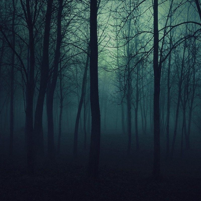 10 Top Dark Forest Hd Wallpaper FULL HD 1920×1080 For PC Desktop 2020 free download dark forest wallpapers wallpaper cave 1 800x800