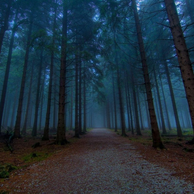10 Latest Hd Forest Wallpapers 1080P FULL HD 1080p For PC Background 2018 free download dark forest wallpapers wallpaper cave 3 800x800